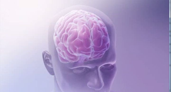 brain memory_1432830351653.jpg