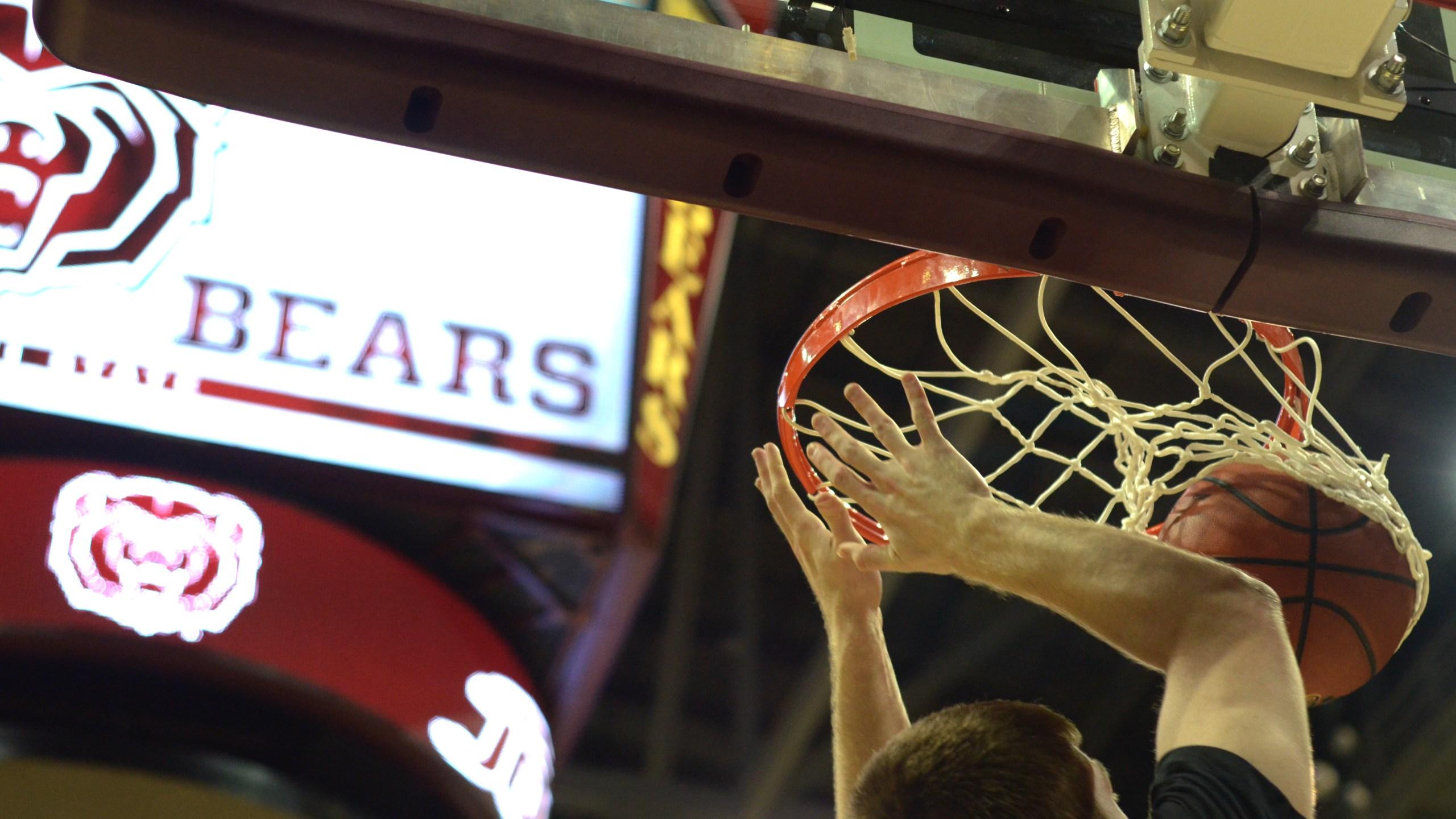 msu bears basketball