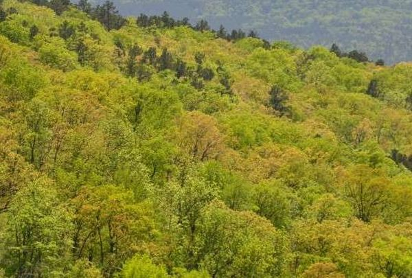 Ozarks forest_1458651760246.jpg