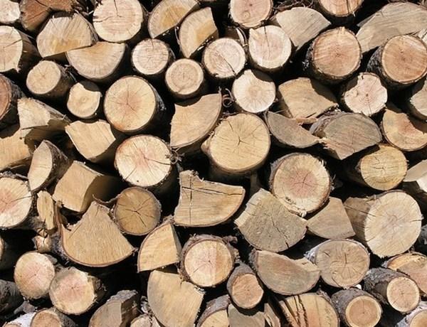Firewood_8441257544664368940