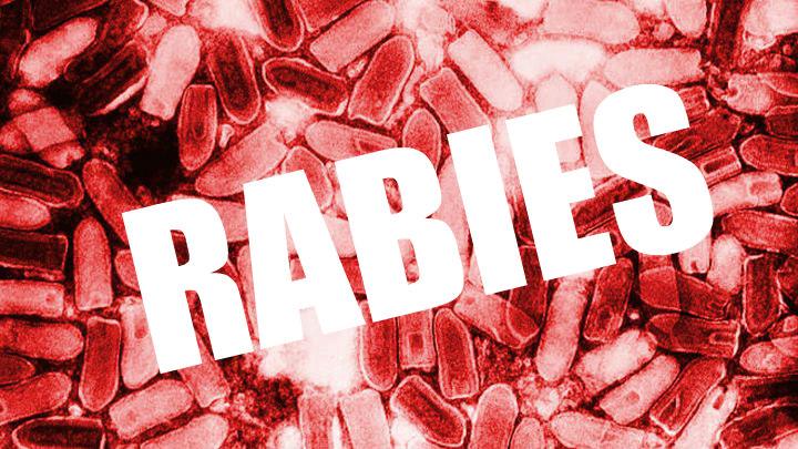 rabies_1462556216618.jpg