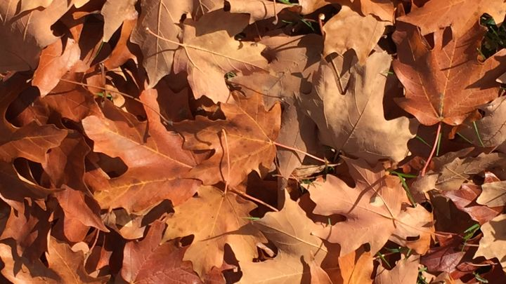 autumn leaves_1446922590547.jpg