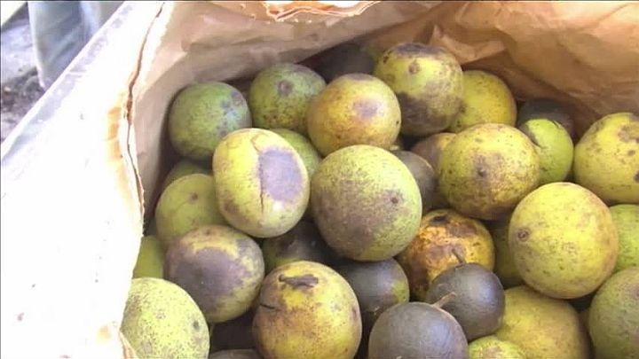 black walnuts_1476189624188.jpg