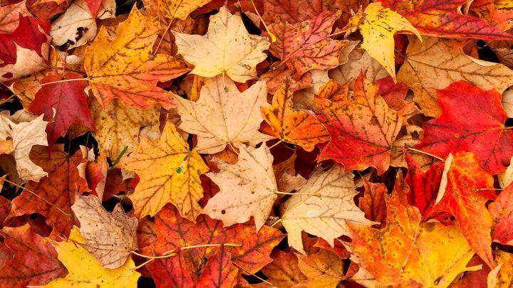 fall colors_1476987380553.jpg