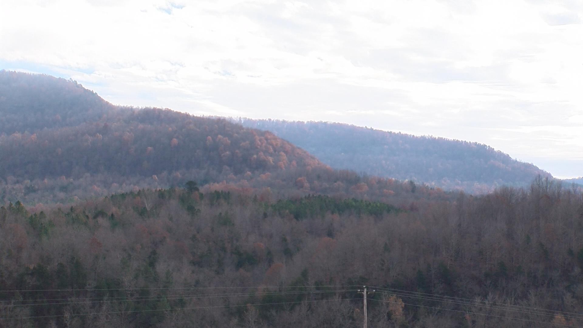 Council Rock Forest
