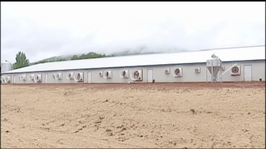 C-H Hog Farm Passes Drilling Study_05365717