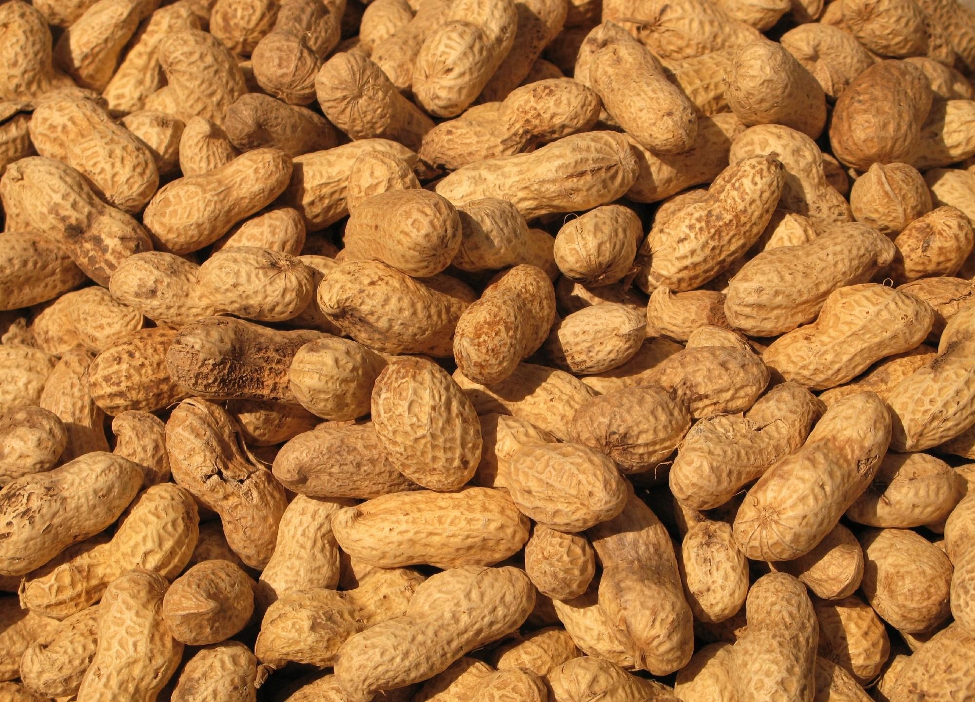 Grumpy-Foods---Peanuts-jpg_42593_ver1_20170105124202-159532