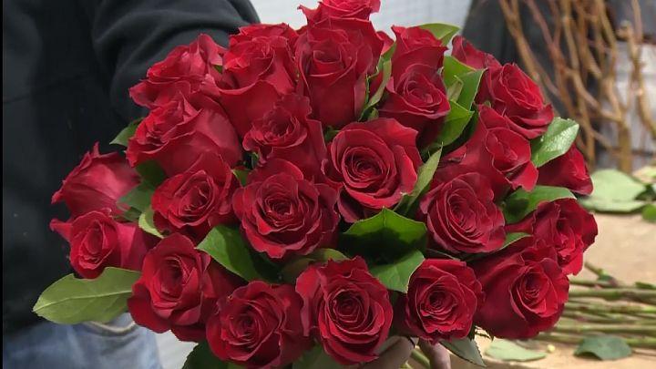 red roses_1487071160332.jpg