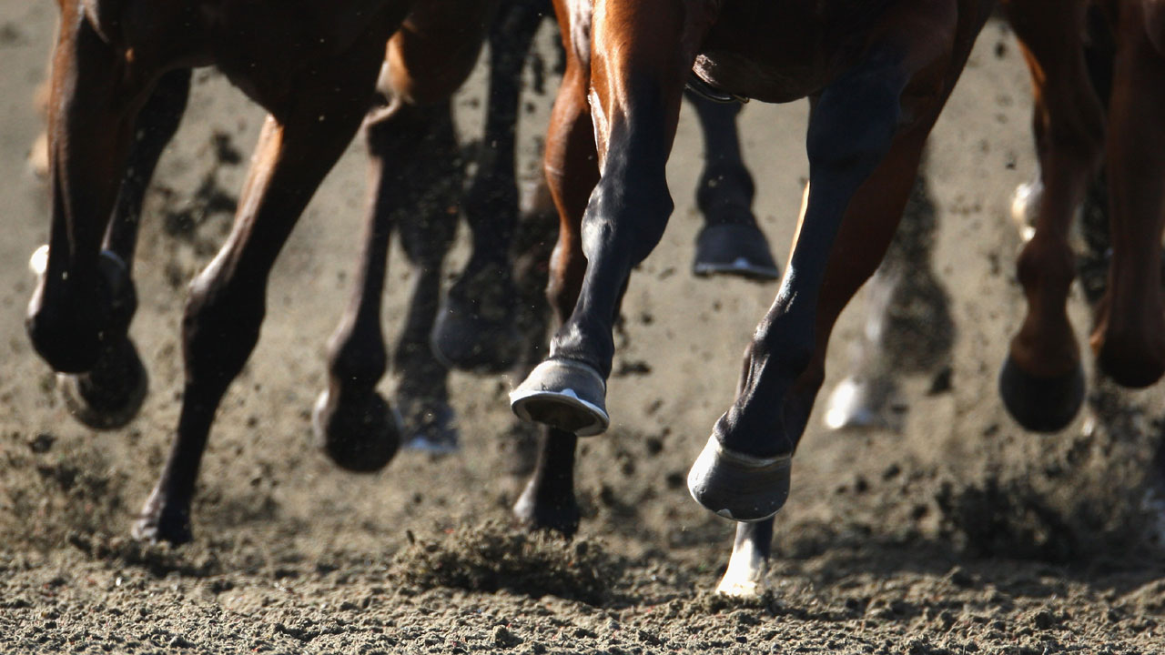 closeup on hooves as horses race around track81611072-159532
