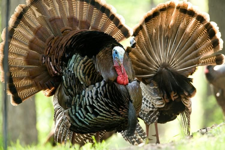 turkey_1491393042698.jpg