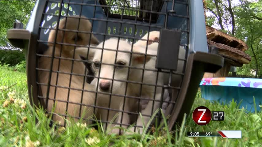 Humane Society Rescues 16 Hoarded Dogs_06678513
