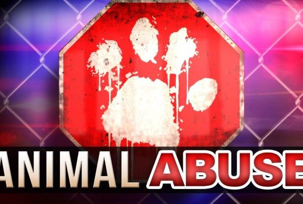 animal abuse_1496608197211.jpg