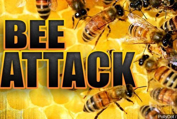 bee attack_1497984928742.jpg