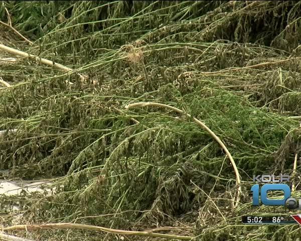 40-000 Marijuana Plants Recovered in Carroll County_34944058