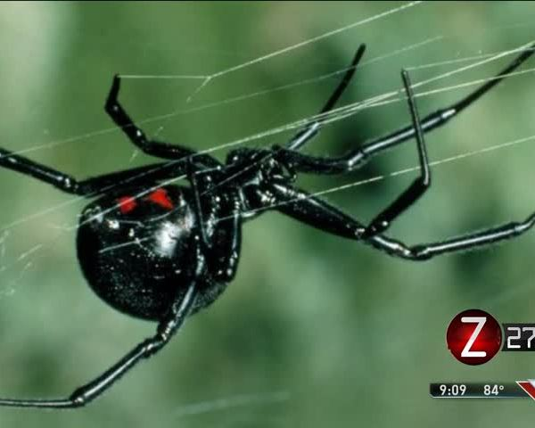 Missouri Spiders and Bugs Worse This Season_93913225
