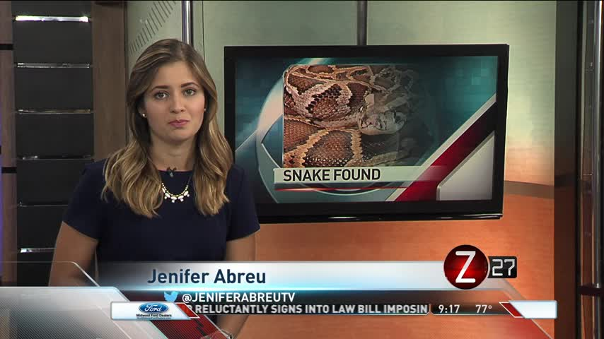Missing 20ft Python Found In Christian County_59030209