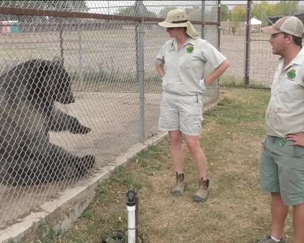 Wildlife Refuge Welcomes Five Rescued Bears and Needs Help_68321509