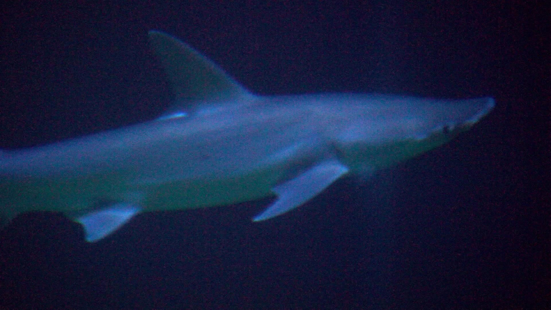 "2 men survive shark attacks in Florida: ""The shark pretty"