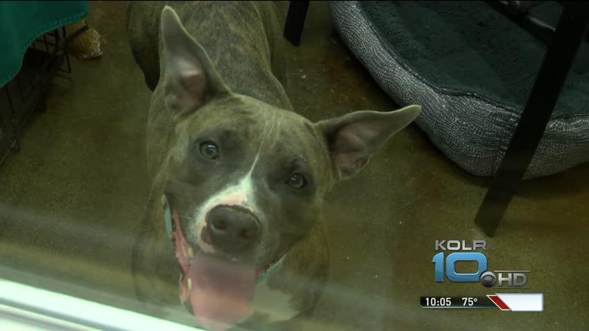 C-A-R-E- Cage-Free Dog Center Opens_82883238