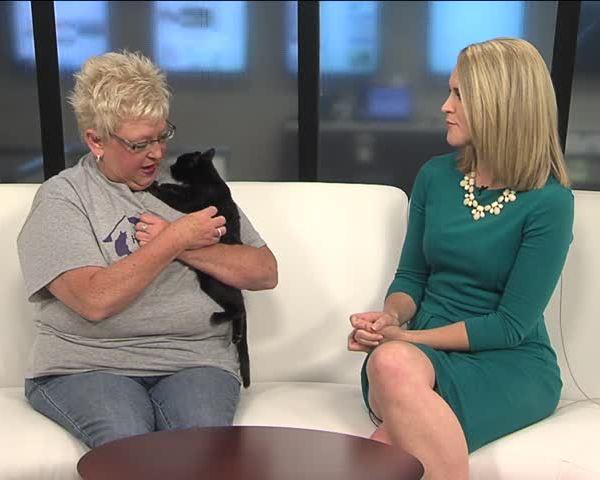 Pet Connection - Home for Life Cat Sanctuary_34348130