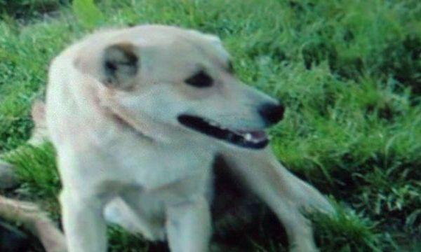 Arkansas dog shot_1511259410829.jpg
