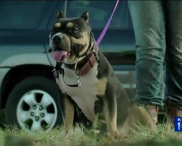 City Clerk Verified Signatures to Repeal Pit Bull Ban_39896773