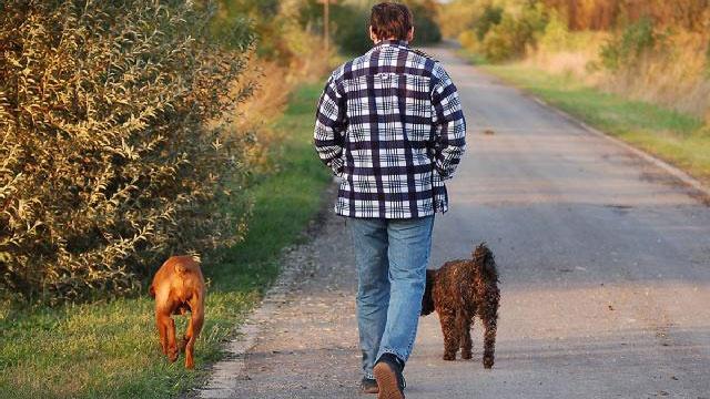 Dog myths - generic 8_2126497222023750-159532