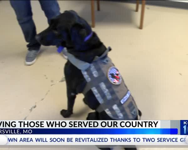 New Nonprofit Connects Veterans With Service Dogs_95509792