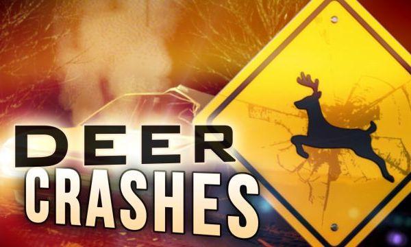 deer crashes_1512035550448.jpg
