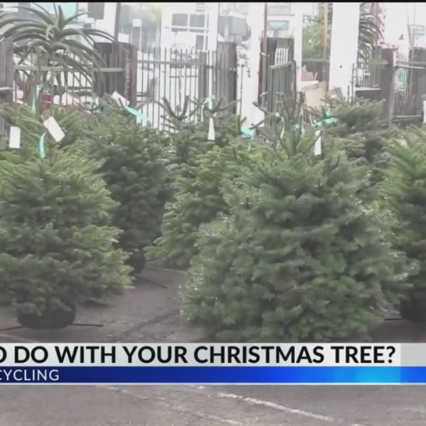 Christmas_Tree_Recycling_Services_0_20171227131316