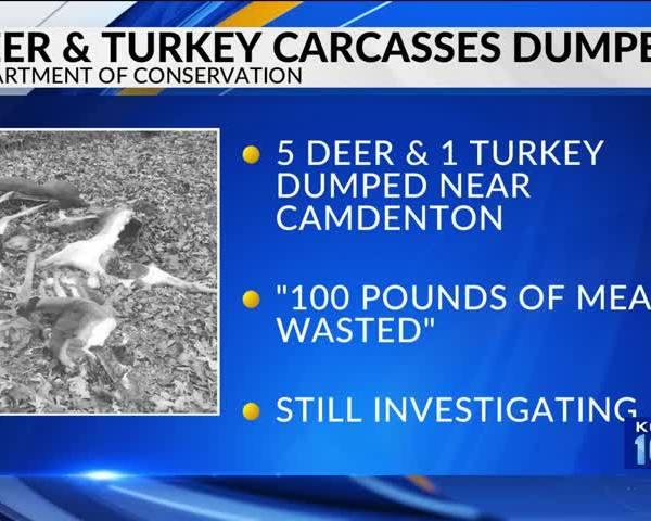 Missouri Poacher Dumps Multiple Carcasses_40894999