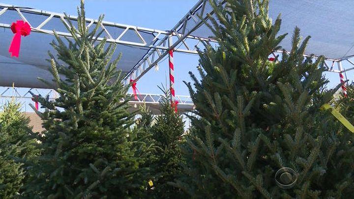 christmas tree_1512266694440.jpg