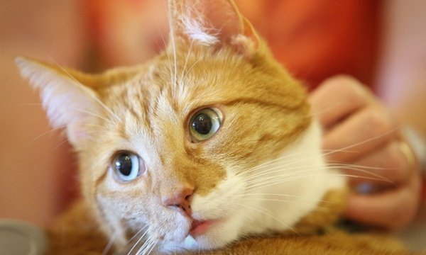 Cats - Catnip1_2040139210534174-159532