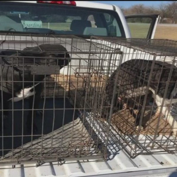 Police_Find_3_Dogs_Left_Behind_in_Abando_0_20180130041247