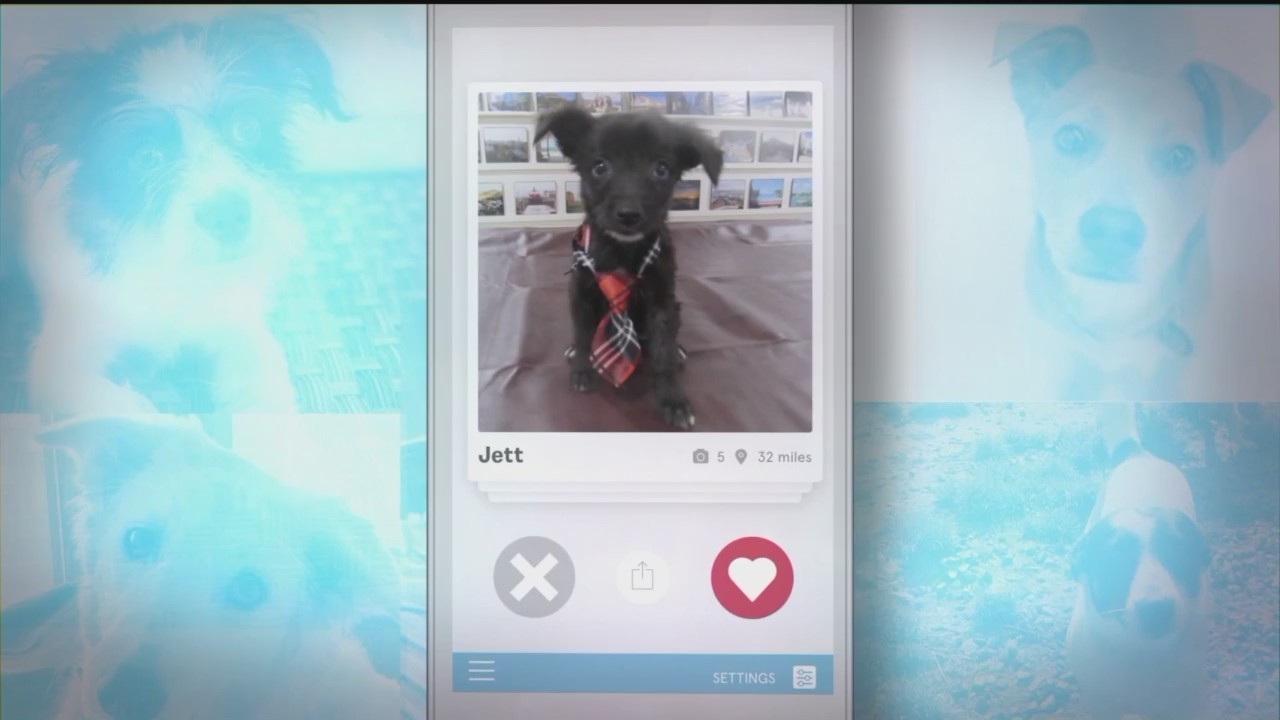 _Bark_Buddy__App_Can_Help_You_Find_a_Pet_0_20180330232016