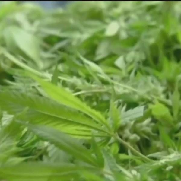 Amendment_to_Legalize_Medical_Marijuana__0_20180508090729