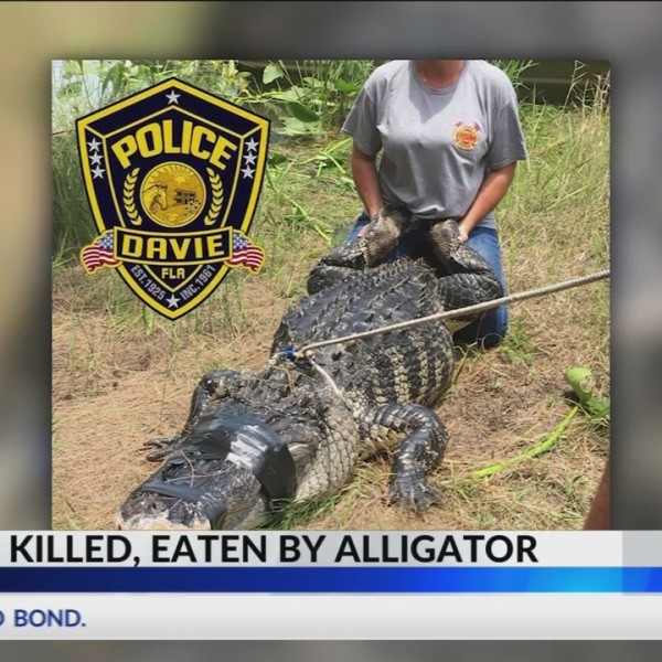 Alligator_May_Have_Bitten__Killed_Woman__0_20180610023233