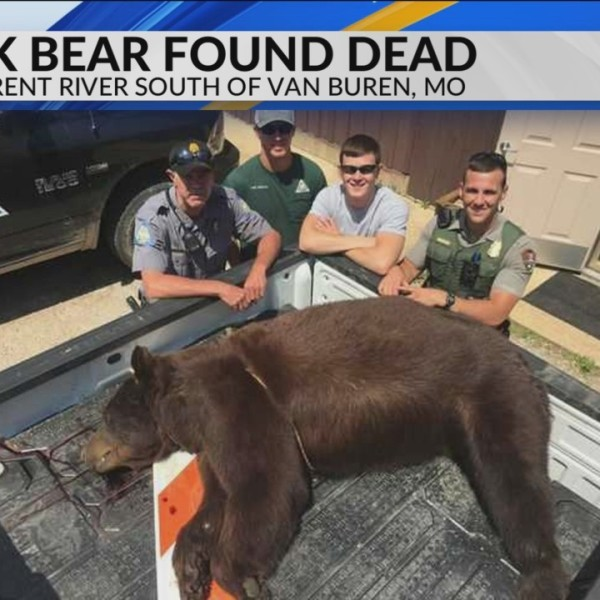 Black_Bear_Found_Dead_in_the_Current_Riv_0_20180611231656
