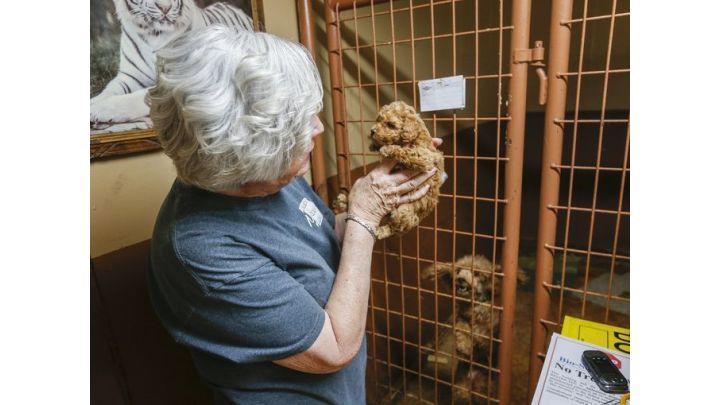 pup being held_1528772228865.jpg.jpg