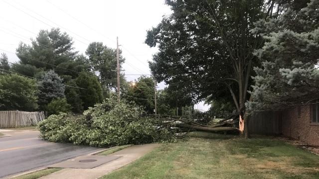 tree down_1532070942370.jpg.jpg