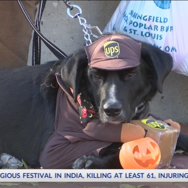 11th_Annual_Pets_and_Pumpkins_Event_Held_0_20181021030856