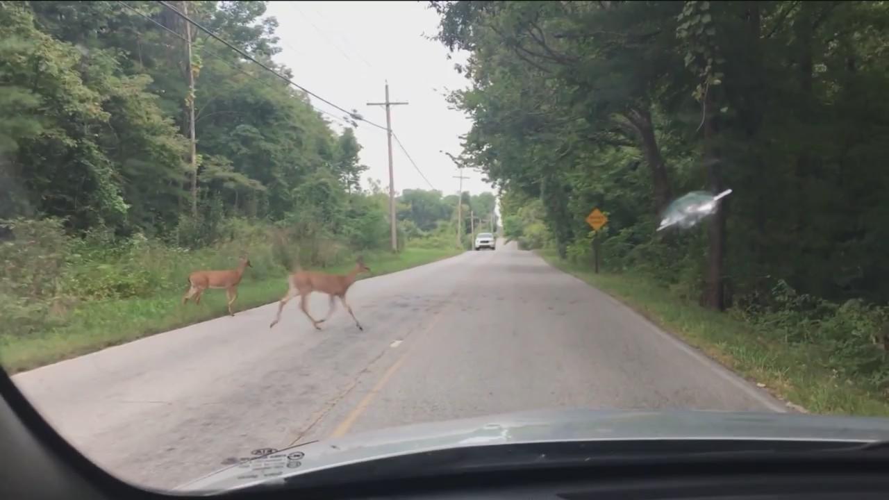 Behoove_Safety_Tips_For_Deer_on_Highways_0_20181006024932