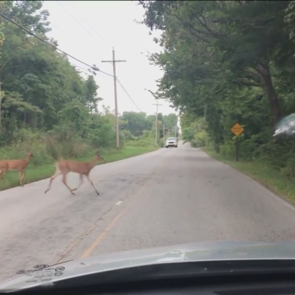Behoove_Safety_Tips_For_Deer_on_Highways_0_20181006024932