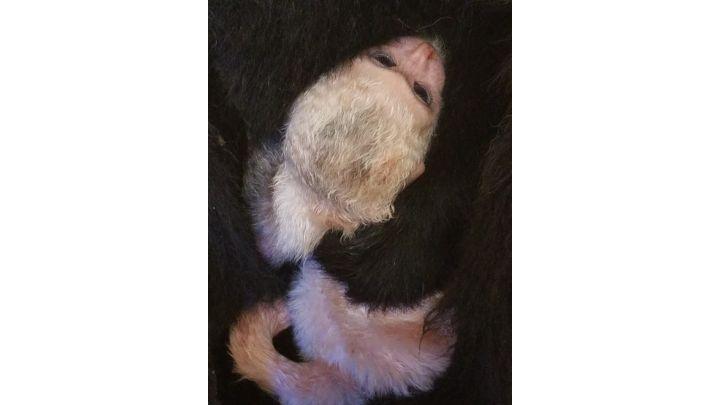 baby monkey_1539398236292.jpg.jpg