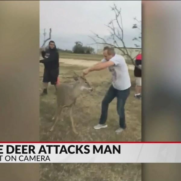 Oklahoma_Pastor_Fights_Off_Deer_0_20181110040725
