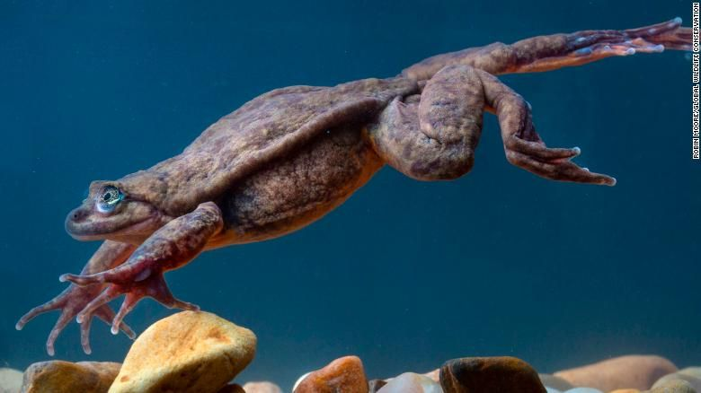 Romeo, the World's Loneliest Frog, May Have Finally Found a