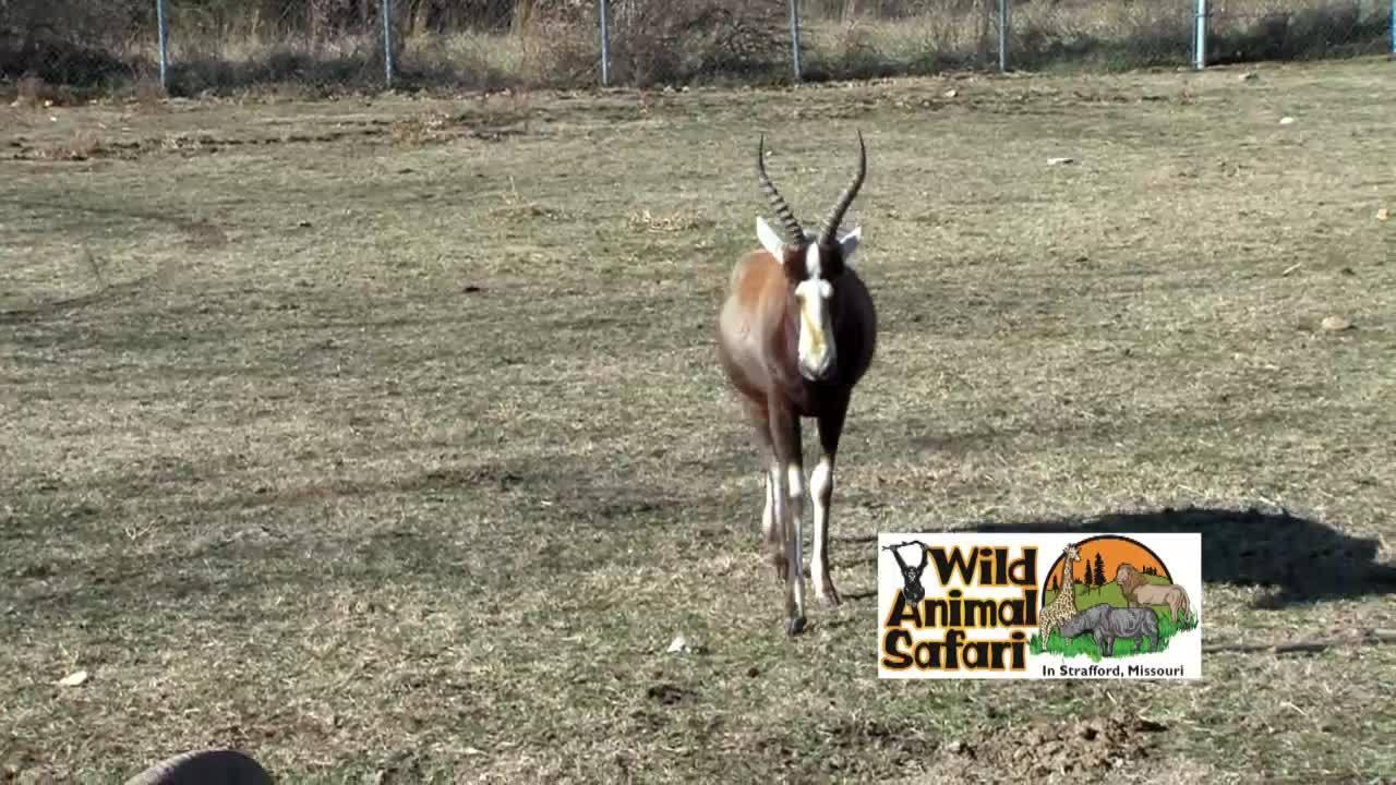 Wild Animal Wednesday - Bok Bok