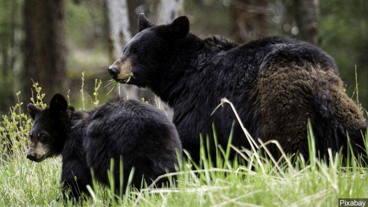 bears_1548642677657.jpg