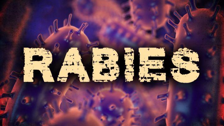 rabies_1500233853974.jpg