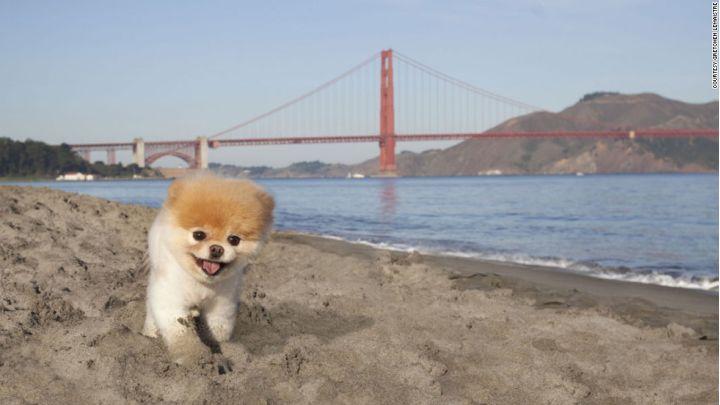 worlds cutest dog_1547911396844.jpg.jpg